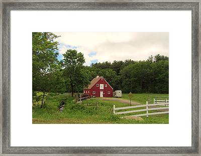 Cattle Crossing Framed Print
