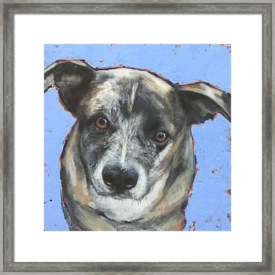 Cattle Dog Framed Print