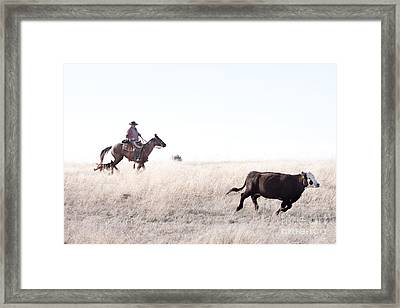 Cattle Drive Framed Print by Cindy Singleton