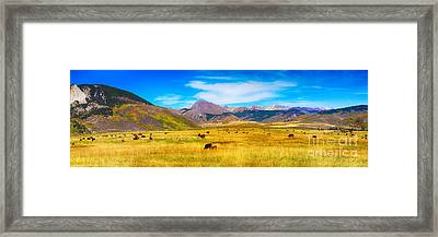 Cattle Grazing Autumn Panorama Framed Print by James BO  Insogna