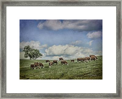 Cattle Grazing Framed Print by Jeff Swanson