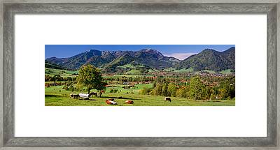 Cattle In A Field With Mountain Range Framed Print