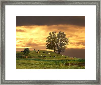 Cattle On A Hill Framed Print by Randall Branham