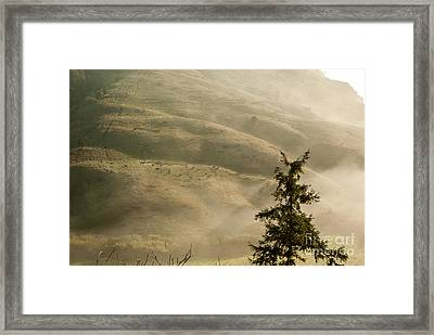 Cattle On Hillside 1.7138 Framed Print by Stephen Parker