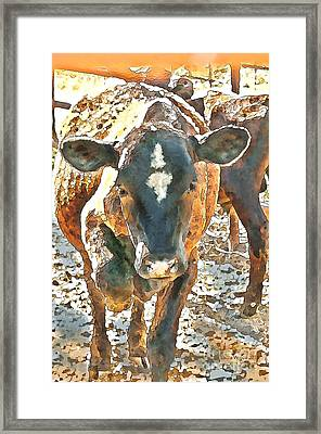 Cattle Round Up Framed Print by Artist and Photographer Laura Wrede