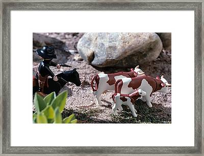 Cattle Rustler Framed Print