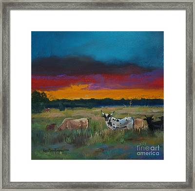 Cattle's Cadence Framed Print