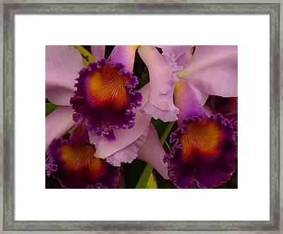 Cattleya Frills Framed Print