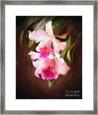 Cattleya Framed Print by Marvin Nuto