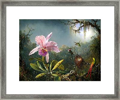 Cattleya Orchid And Three Brazilian Hummingbirds Framed Print