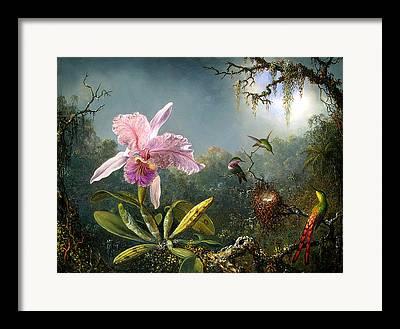 Cattleya Digital Art Framed Prints