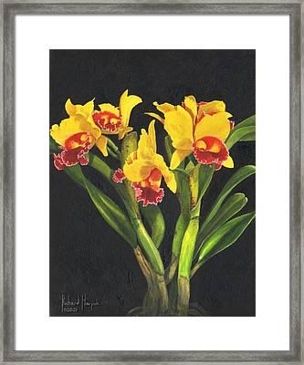 Cattleya Orchid Framed Print by Richard Harpum