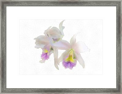 Cattleya Orchids Softly Framed Print by Rosalie Scanlon