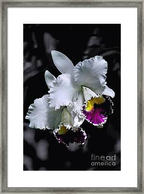 Cattleya Framed Print by Peter Lessey