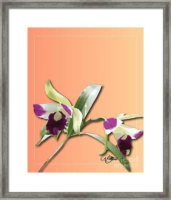 Cattleya Triage Dafoi Art 1 Of 3 Framed Print by Ruth  Benoit