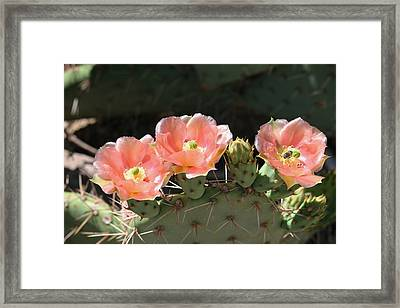 Cactus Plus Friend Framed Print