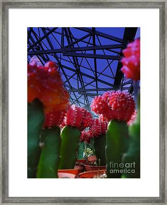 Catusflower Framed Print