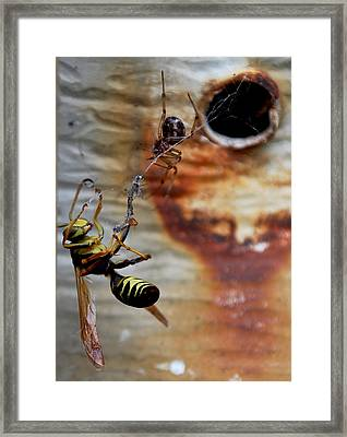 #caught Framed Print by Becky Furgason