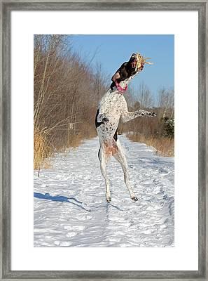 Caught Framed Print by Brook Burling