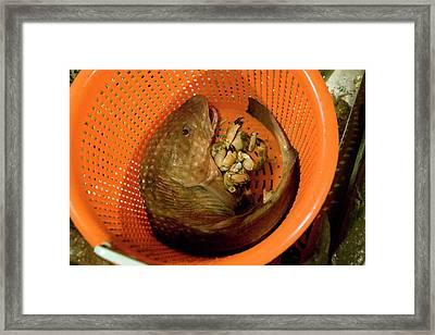 Caught Fish Framed Print