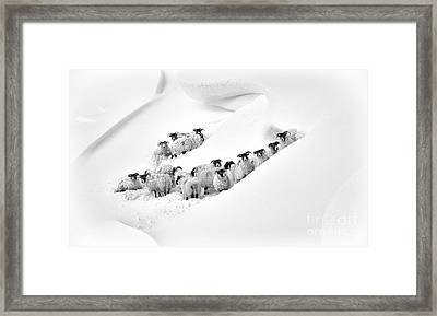 Caught In A Drift Framed Print by Tim Gainey