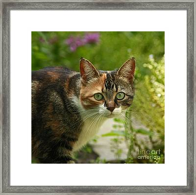 Caught In The Act Framed Print by Inspired Nature Photography Fine Art Photography