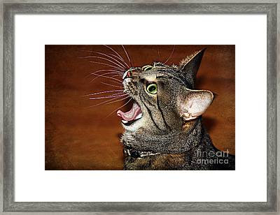 Caught In The Act Framed Print by Jolanta Anna Karolska