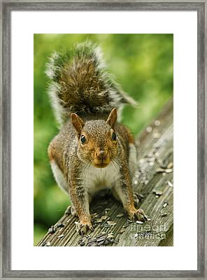 Caught In The Act Framed Print by Lois Bryan
