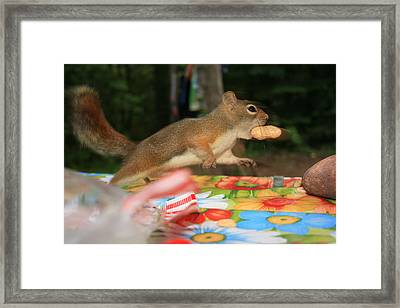 Framed Print featuring the photograph Caught In The Act by Paula Brown