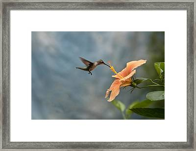 Caught In The Act Framed Print by Robert Camp