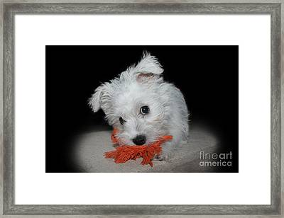 Caught In The Act Framed Print by Terri Waters
