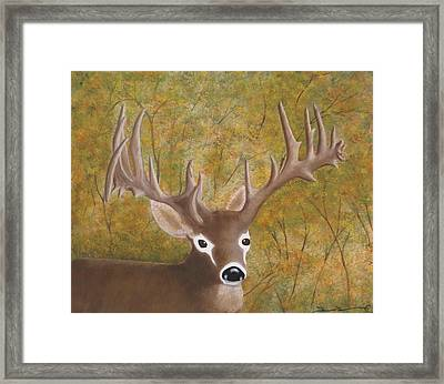 Caught In The Headlights Framed Print by Tim Townsend