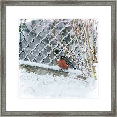 Caught In The Storm Framed Print by Kim Thompson