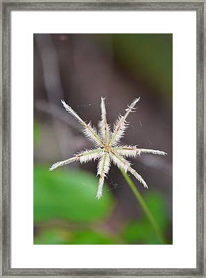 Caught In The Web Framed Print