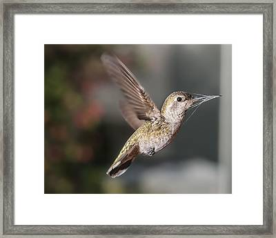Caught In The Web Framed Print by Mike Herdering