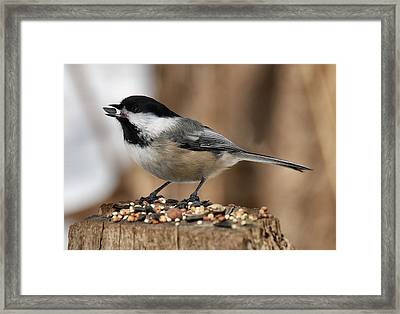 Framed Print featuring the photograph Caught It  by Elaine Manley