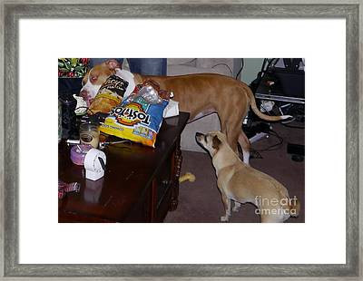 Caught Framed Print by Jeff Pickett