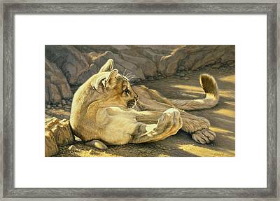 Caught Napping Framed Print by Paul Krapf