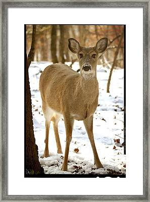 Caught Playing In The Snow Framed Print by Lena Wilhite