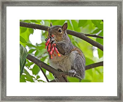 Caught Red Handed Framed Print by Eve Spring