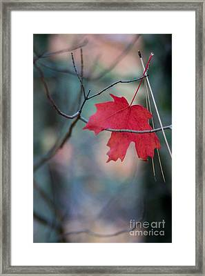 Framed Print featuring the photograph Caught by Ron Chilston