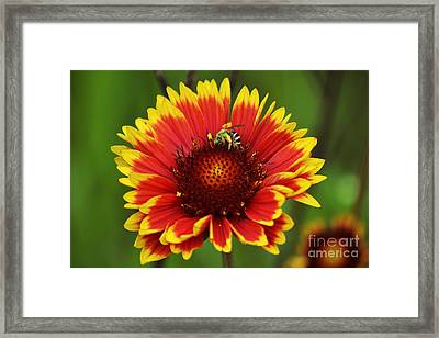 Caught Snacking Framed Print