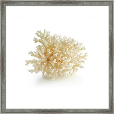 Cauliflower Coral Framed Print