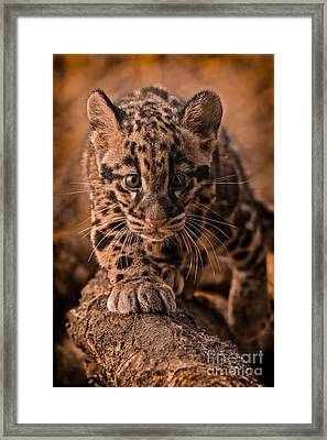 Cautious Advance Framed Print by Ashley Vincent