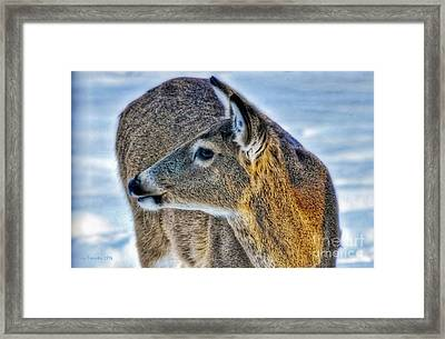 Framed Print featuring the photograph Cautious Deer by Trey Foerster