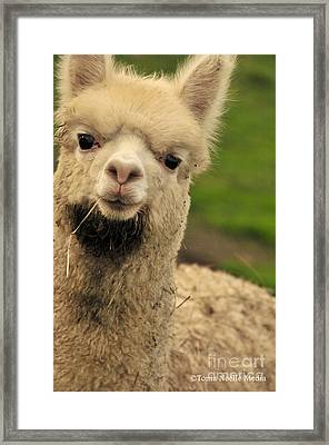 Cautiously Curious Framed Print