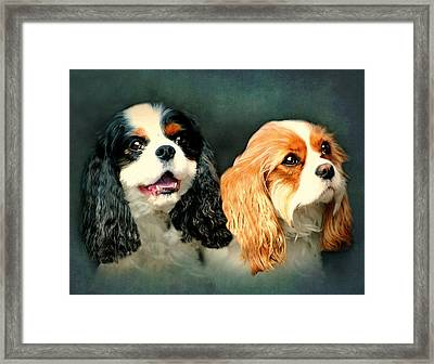 Cavalier King Charles Framed Print by Diana Angstadt