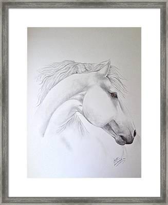Cavallo Framed Print