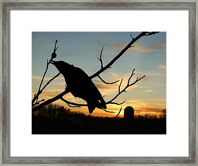 Cawcaw Over Sunset Silhouette Art Framed Print