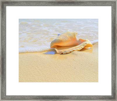 Cayman Conch #2 Framed Print